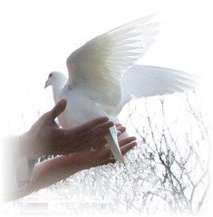 Funeral Doves and Wedding Doves