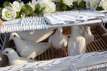 Wedding Doves UK