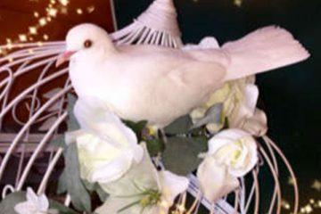 Java Doves